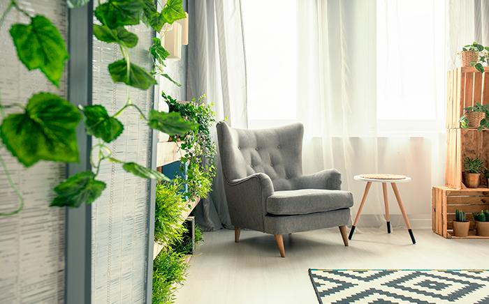 Plants decoration home